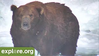 Bears Abound, Otis, Grazer & More! | Top Brooks Falls Moments