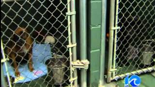 preview picture of video 'Animals from Louisiana shelter moved to Virginia Beach'