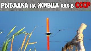 Бортовой для ловли окуня на живца
