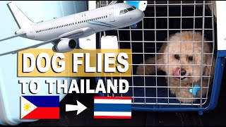 HOW I TRAVELED WITH A DOG ABROAD - Philippines to Thailand | Poodle Mom