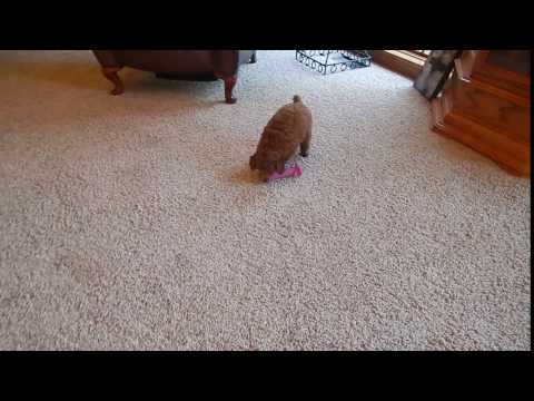 Video of Cinnamon Bunn