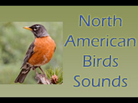 Video of North American Birds Free