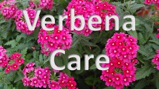 Verbena Care