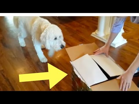 A Dog Saw His Birthday Gift Inside This Cardboard Box – And His Reaction Has Swept The Internet
