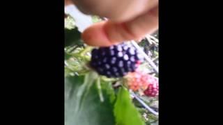 UVPCGG Food Forest Classroom Garden: 07/20/18 Kitchen Garden Tour