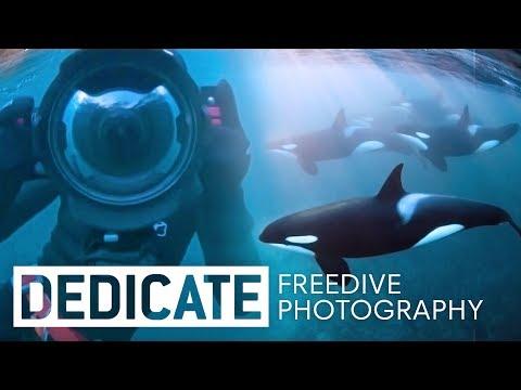 Meet the photographer that dives with orcas: Jacques de Vos.