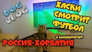 DOGVLOG: ХАСКИ СМОТРИТ ФУТБОЛ и комментирует матч РОССИЯ ХОРВАТИЯ. Говорящая собака