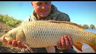 ВОТ ЭТО САЗАН. БЕШЕНЫЙ КЛЁВ САЗАНА НА ЗАКИДУШКИ.  Рыбалка с ночёвкой на жмых (макуху)
