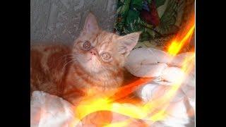 Смешные кошки Позитив Создай себе хорошее настроение
