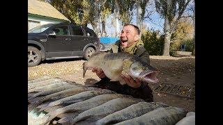 Отчет о рыбалка на нижней волге в октябре