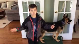 How to Care for Your Dog - A Kid friendly tutorial