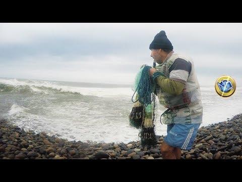 Carpa siamese nel russo che pesca 3.1