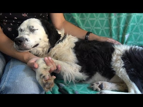 Dog Falls Asleep On My Lap After Realizing She's Being Rescued