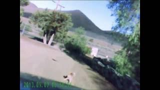 Juvenile hawk tries to catch cat.