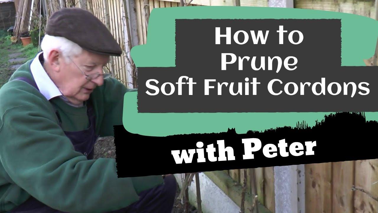 Pruning Soft Fruit Cordons