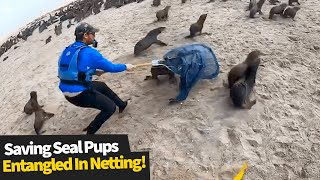 Kayakers help save seal pups entangled in netting.