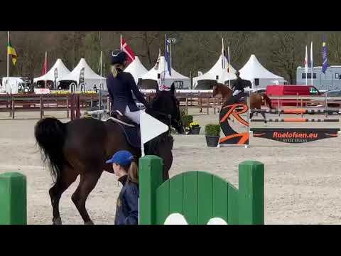 Les chevaux en grande forme au Z-Tour