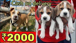 CHEAPEST DOGS MARKET IN DELHI NCR | WHOLESALE & RETAIL | PITBULL, LABRADOR, HUSKY, DOBERMAN, BEAGLE