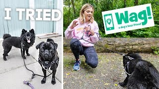 I Tried Wag! Dog Walking As A Side Hustle