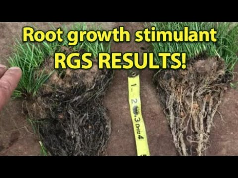 RGS RESULT! Root growth stimulant - Tall Fescue (PART 2)