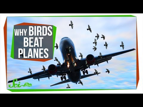 Why Don't Birds Have Vertical Tails Like Airplanes?