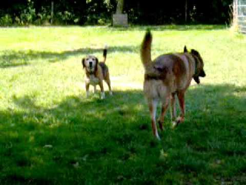 Hondenspel bij Dogs&Co