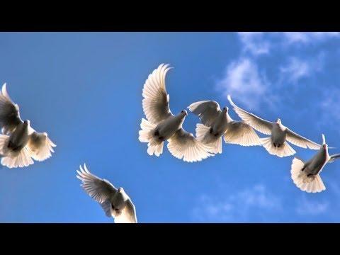 Joan Baez - If I Knew  [HD]+