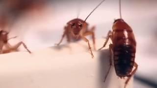 Диск приманка для тараканов