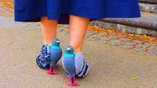 Туфли в виде голубей шокировали людей