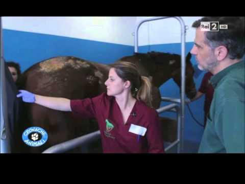Video lattivatore di cavallo per risposte di donne
