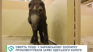 Смерть Тенді: у Харківському зоопарку прокоментували заяву одеського колеги