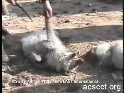 0e903aa3929 Animals are Skinned Alive on Chinese Fur Farms. Terrasos. Έτσι φτιάχνονται  οι μπότες Ugg σου
