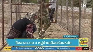 ลิงอาละวาด 4 หมู่บ้านเดือดร้อนหนัก   คัดข่าวมาเล่า   NationTV22