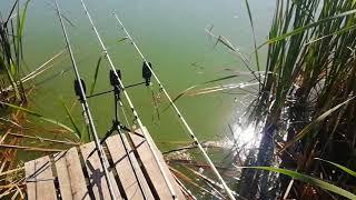 Платная рыбалка в заокском районе тульской области