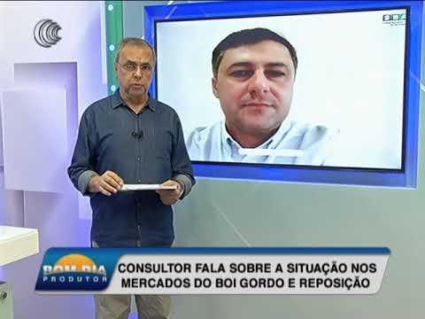 Consultor fala sobre mercado do boi gordo e reposição