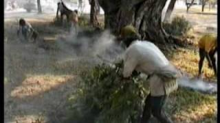preview picture of video 'Tree Removal in Dili for Firewood'