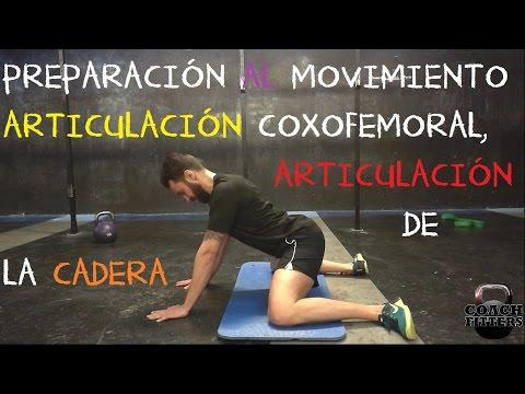 Músculos de la rodilla que actúan sobre la articulación