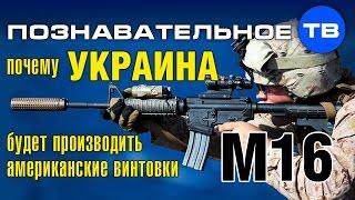 Почему Украина будет производить американские винтовки M16? (Познавательное ТВ, Артём Войтенков)