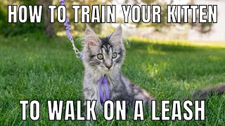 How to Train Your Kitten to Walk on a Leash | Leash-Training Tips