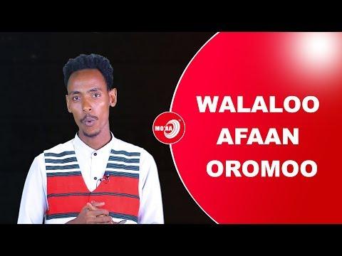 Download WALALOO'  WALOO  YOHAANNIS KABBADEE WALOO HD Mp4 3GP Video and MP3