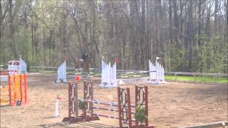 Cosmo - Equitation/Jumper for sale