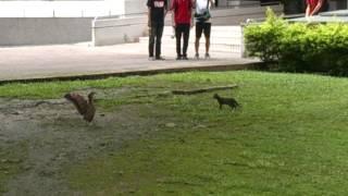 大笨鳥vs貓