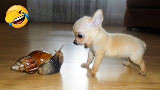 Cute Dogs And Cats That Will Make You Laugh 🥰 - Funny Animals Compilation #5 😂