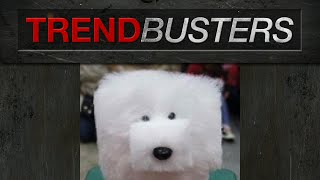 Japanese Cube Dog Grooming - Trendbusters