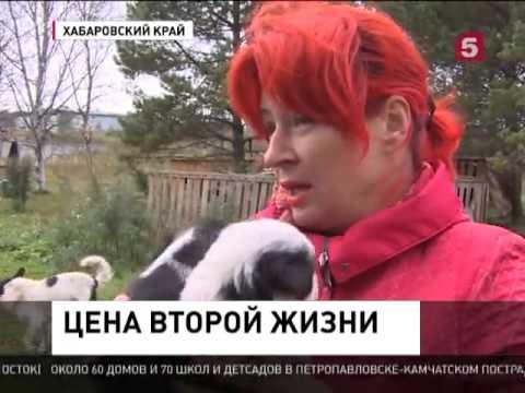 В Хабаровском крае приют с бездомными животными остался без опеки