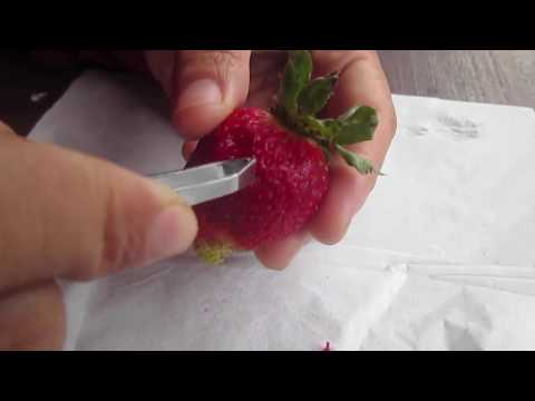 Video Cara Menanam Strawberry dari Biji Part 1