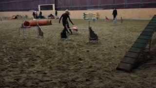 preview picture of video 'Asha Trixtan - whippet agility training'