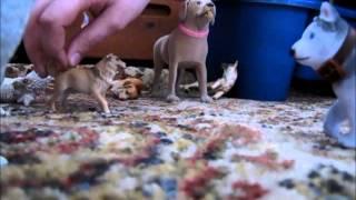 Puppy angels 5