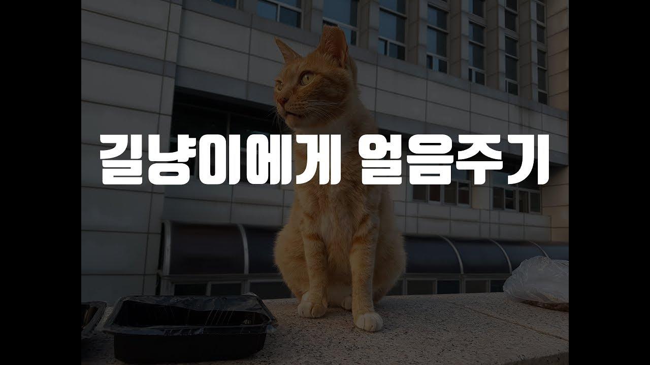 애완/반려동물                  …