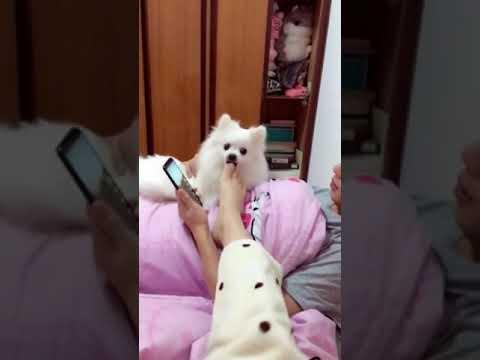 【抖音】寵物合集01 - 狗狗們,浪起來吧。